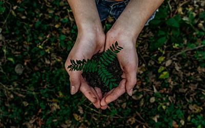 plant-in-hands-mbridge-global